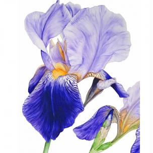 iris-marie-burke