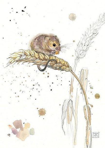 Jane-Crowther-4