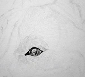 Jak Nakreslit Psa Draw Planet Vytvarne Ateliery