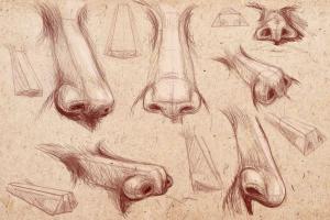 modely kresby nahých postav